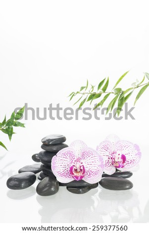 White Moth orchids with black zen stones over white background - stock photo