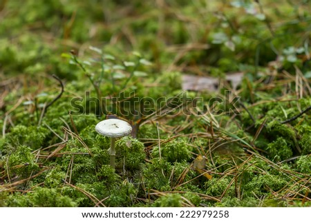 white mushrooms in the forest come the fall - stock photo