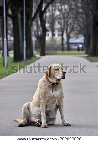 White old dog in a park - stock photo