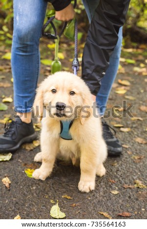 White or blonde puppy looking at camera with fall leaves and owner nearby. Labrador or retriever breed.