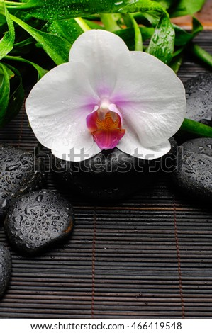 White orchid and black stones on mat background