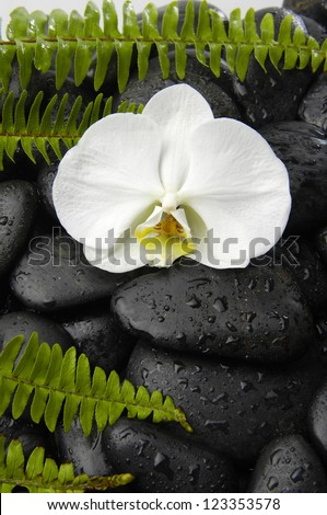 White orchid and green fern on wet pebbles