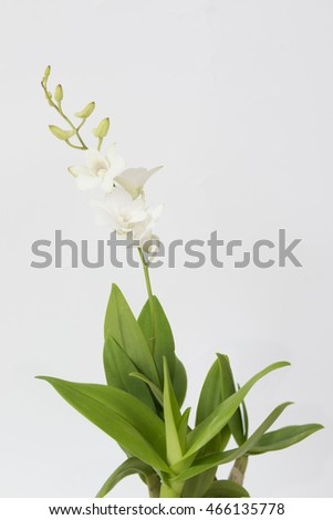 White orchid and green leaf over white background