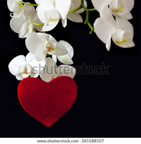 White orchid and love heart.