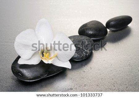 White orchid and stones on  wet surface  with reflection
