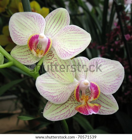 White orchid flower closeup - stock photo