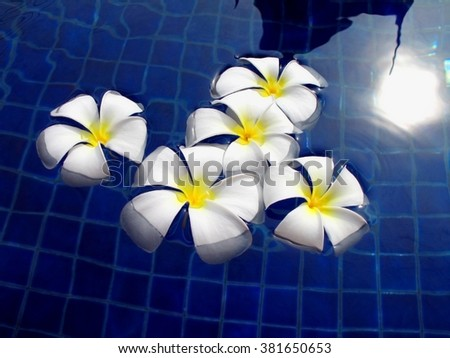 white orchid flower in blue water
