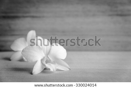 White orchid flower on brown wooden background. Blank space on wooden board , black and white - stock photo