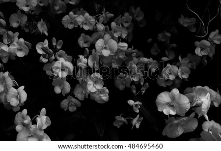 white orchid flower with low-key style horizontal