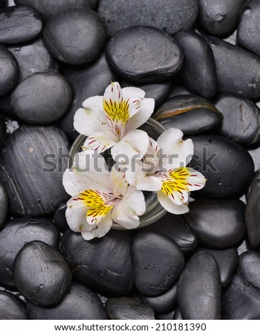 White orchid in bowl on zen black stones