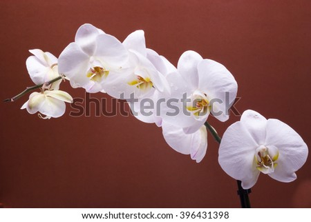 White orchid isolated on bright color background. Beautiful flower