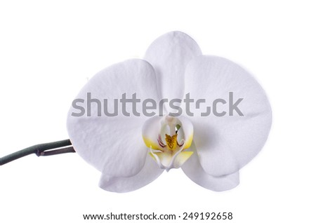 White orchid isolated on white. - stock photo