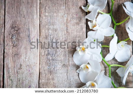 White orchid on a wooden background - stock photo