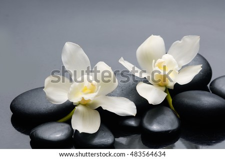 White orchid on black stones background
