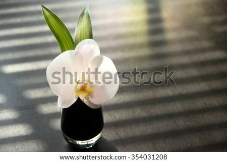 white orchid on black vase - stock photo