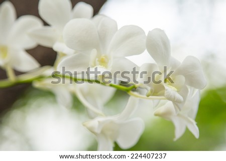 White orchid on green background.