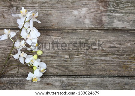 White orchid(Phalaenopsis) on a wooden background close-up