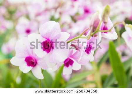white orchid, very shallow depth of field - stock photo