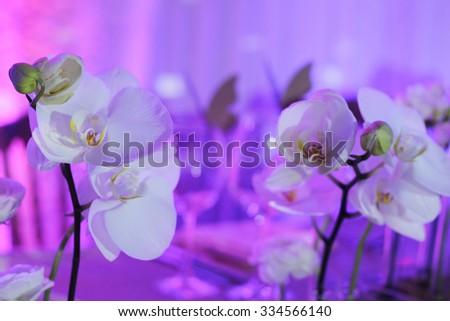 White Orchid wedding  decoration.  White and violet wedding table flower decoration. Glamorous Event, celebration  - stock photo