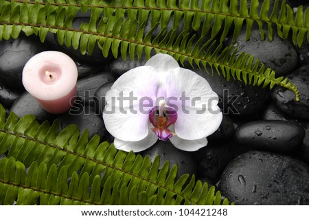 White orchid with green fern and candle on black stones