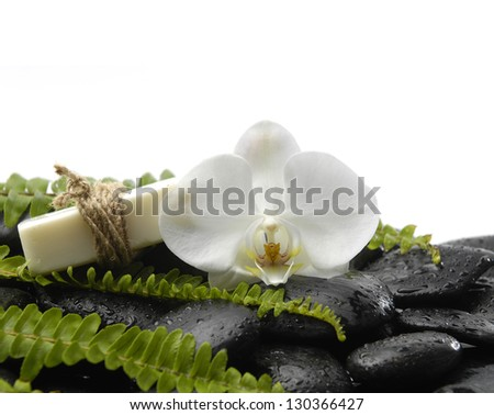 White orchid with green fern and soap on wet pebbles