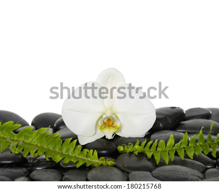 White orchid with two green fern on pebbles