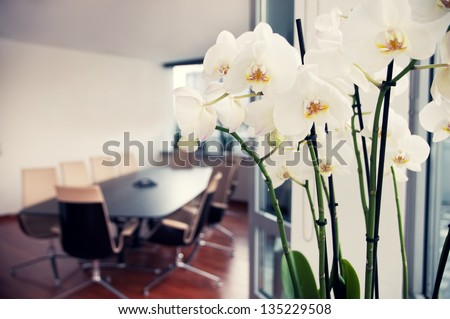 White orchids in conference room - empty office - stock photo