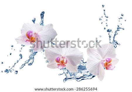White orchids on the water splash. Close up - stock photo