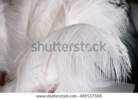 White ostrich feathers or plumes against dark background. Play of light and shadows. Feather seems to be very lightweight here.