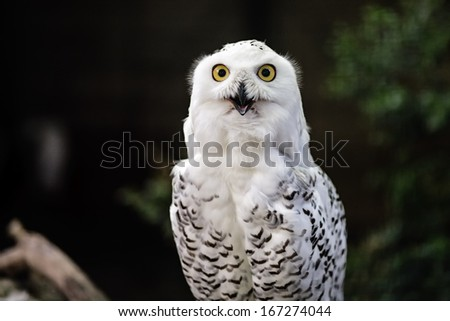 White owl on natural, green background - stock photo