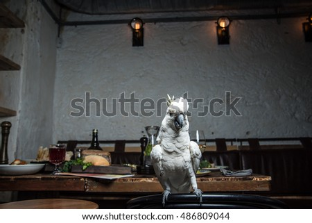 White parrot on a table in a restaurant
