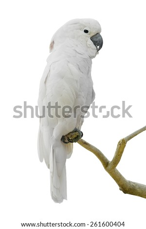 White parrot on th branch - stock photo