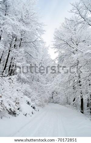 White pathway through frozen dense snowy forest - stock photo