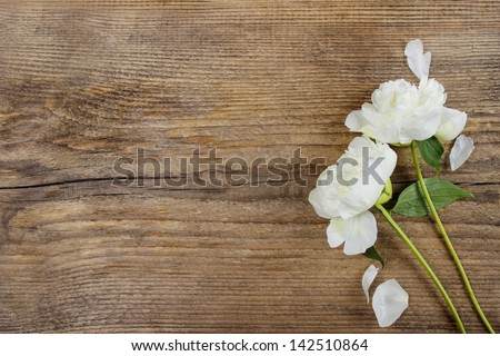 White peonies on wooden background. Copy space. - stock photo