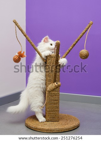 White persian cat playing with the scratching climber tree - stock photo