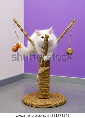 White persian kitten playing on the scratching climber toy - stock photo