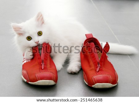 White persian kitten playing with red shoes - stock photo