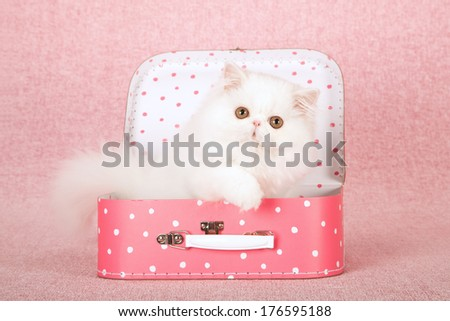 White Persian kitten sitting in pink polka dot suitcase against pink background - stock photo