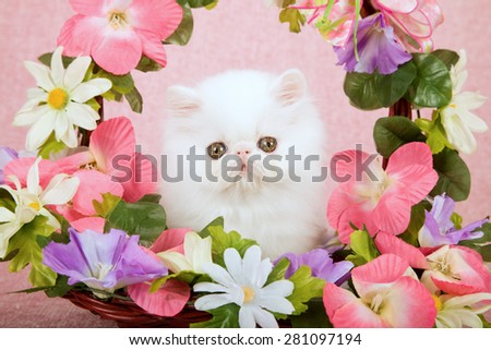 White Persian kitten sitting inside basket decorated with silk flowers on pink background