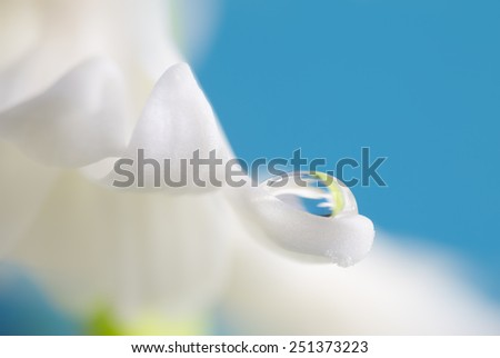 White petal with drop