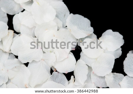 White petals of flowers on a black background - stock photo