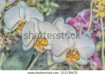 White phalaenopsis orchids, digital oil painting - stock photo