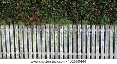 White picket fence and hedge