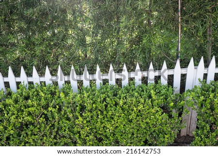 White picket fence is nearly covered with shrubs along the walkway in a suburban neighbor hood. Lush green vegetation in front and behind the fence