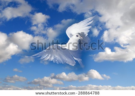 white pigeon and blue sky - stock photo