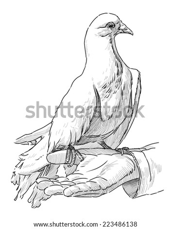 White pigeon on a hand - stock photo
