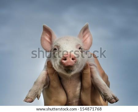 White piglet in girls hands in sky - stock photo