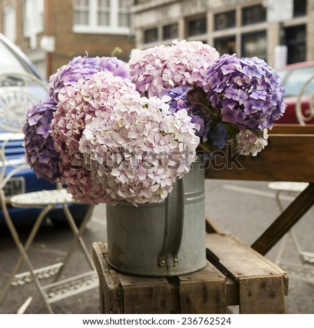 White, pink and purple, violet hydrangea macrophylla. Flower in flower`s shop . Summer time. Flowers standing on the wood bench - stock photo