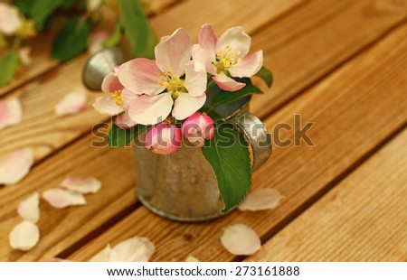 White pink Apple flowers and buds in metal zinc grey small flower garden watering can on  brown natural  wooden surfaces rustic country background with white fallen petals, shallow dof - stock photo