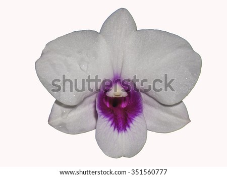 White -  pink  orchid over white